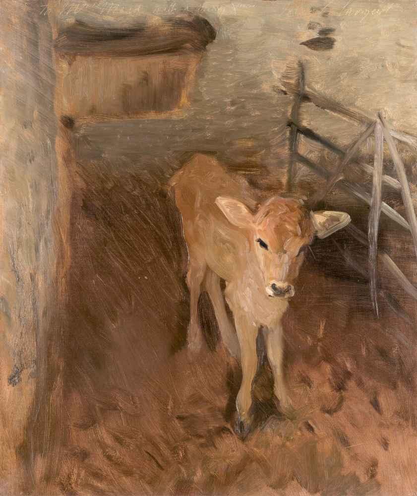 A Jersey Calf - John Singer Sargent