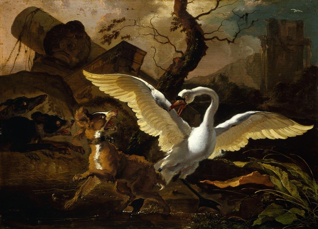 A Swan Enraged - Hondius