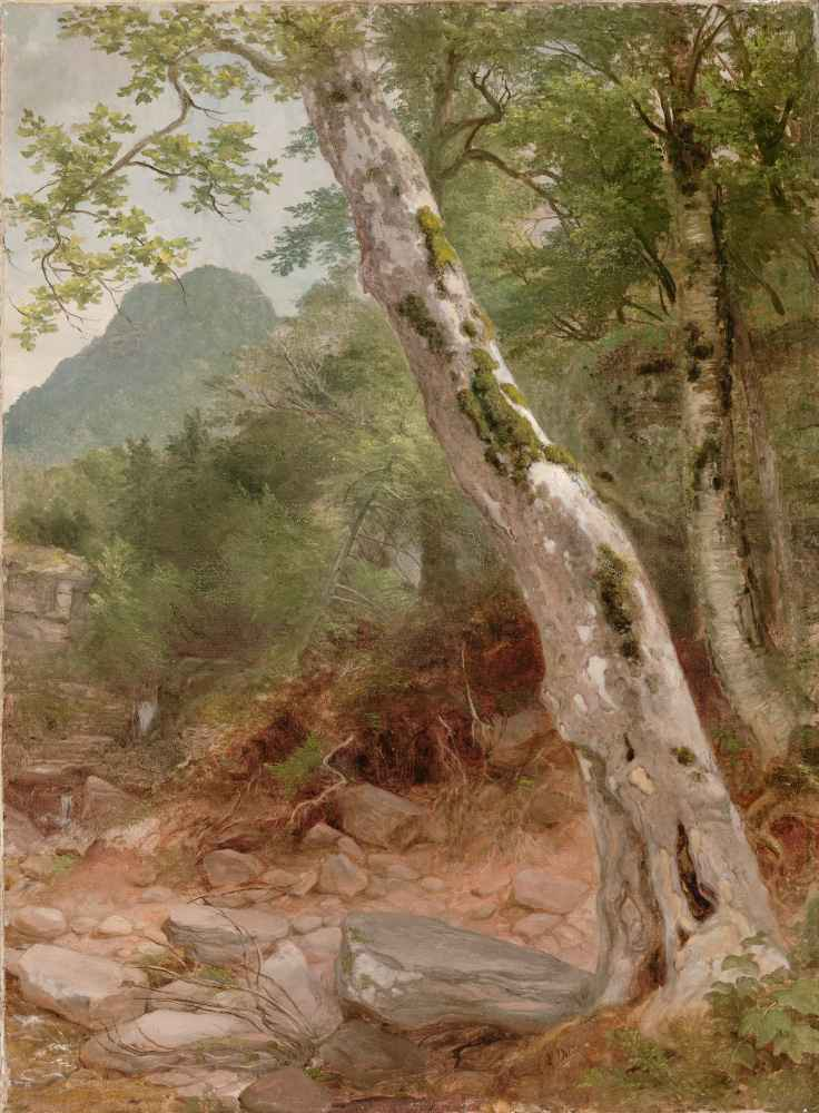 A Sycamore Tree, Plaaterkill Clove (The Sycamore, Kaaterskill Clove) -