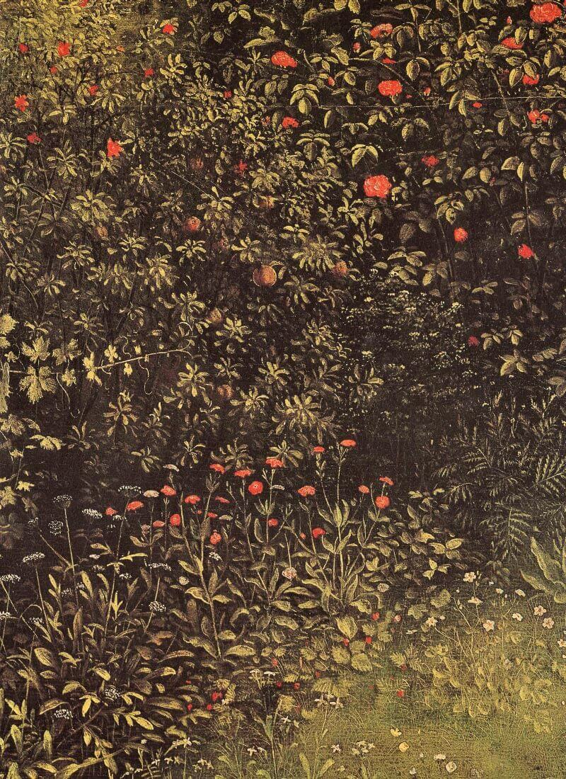 Flowering shrubs and plants - Jan Van Eyck