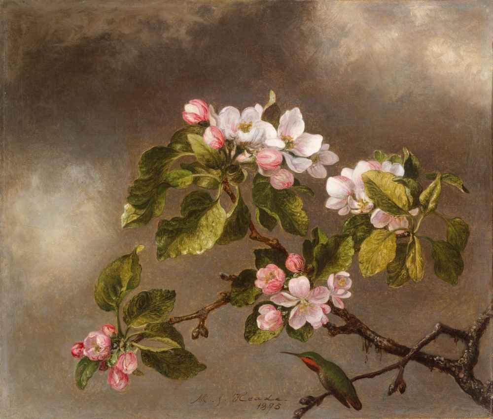 Hummingbird and Apple Blossoms - Martin Johnson Heade