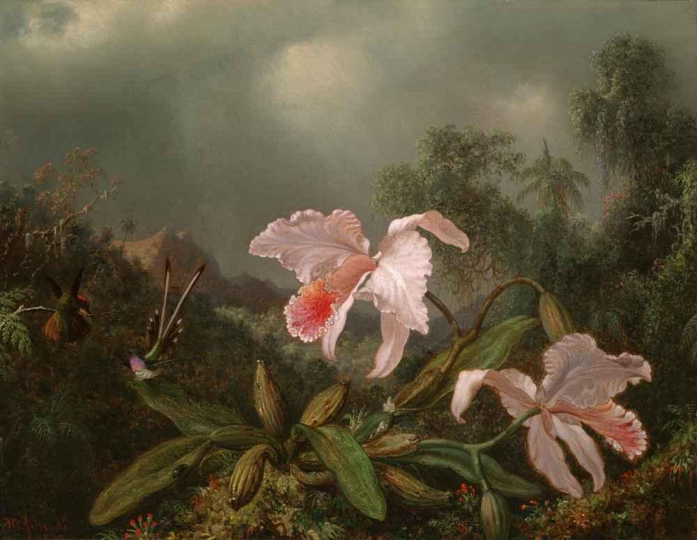 Jungle Orchids and Hummingbirds - Martin Johnson Heade