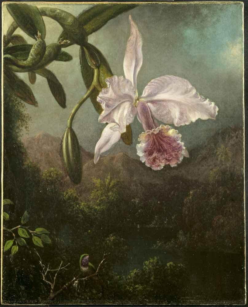 Orchid Blossoms - Martin Johnson Heade