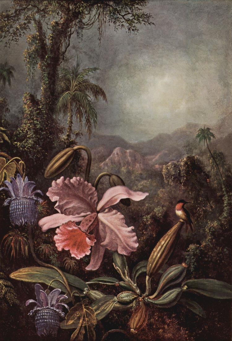 Orchids, passion flowers and hummingbirds - Martin Johnson Heade