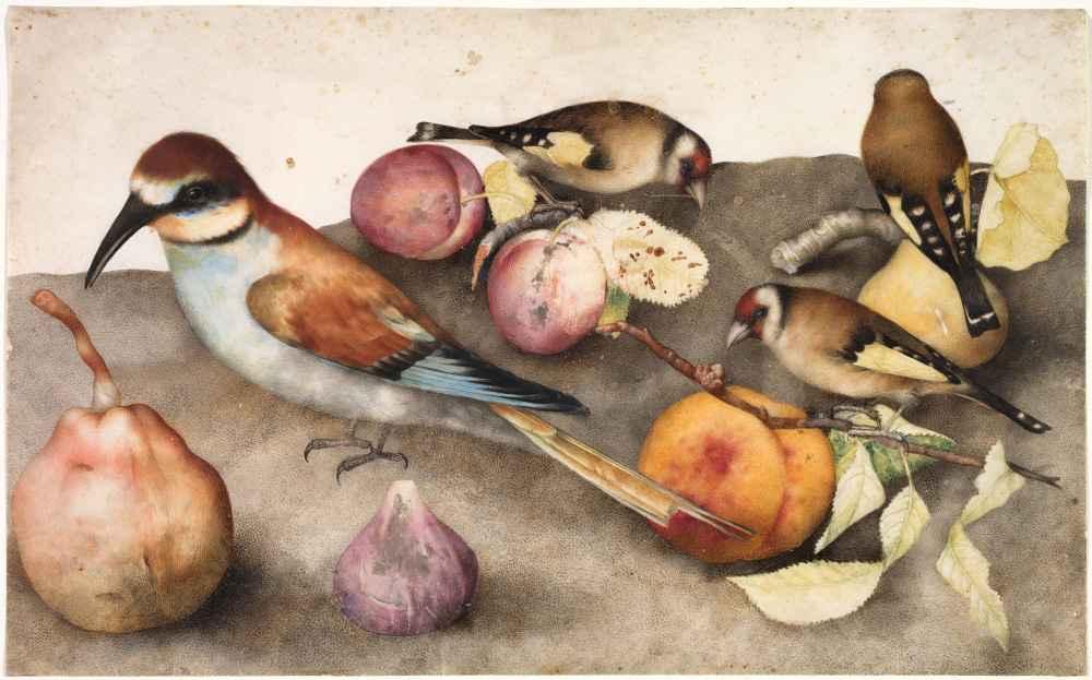 Still Life with Birds and Fruit - Giovanna Garzoni