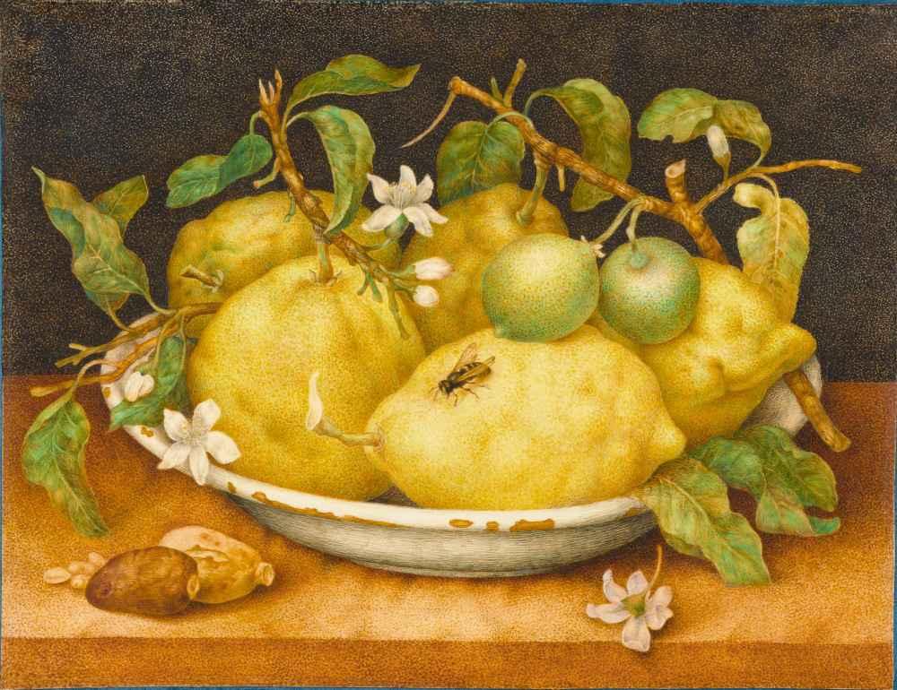 Still Life with Bowl of Citrons - Giovanna Garzoni