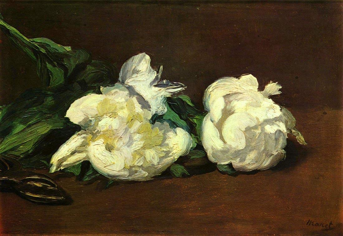 Still life, White Peony - Manet