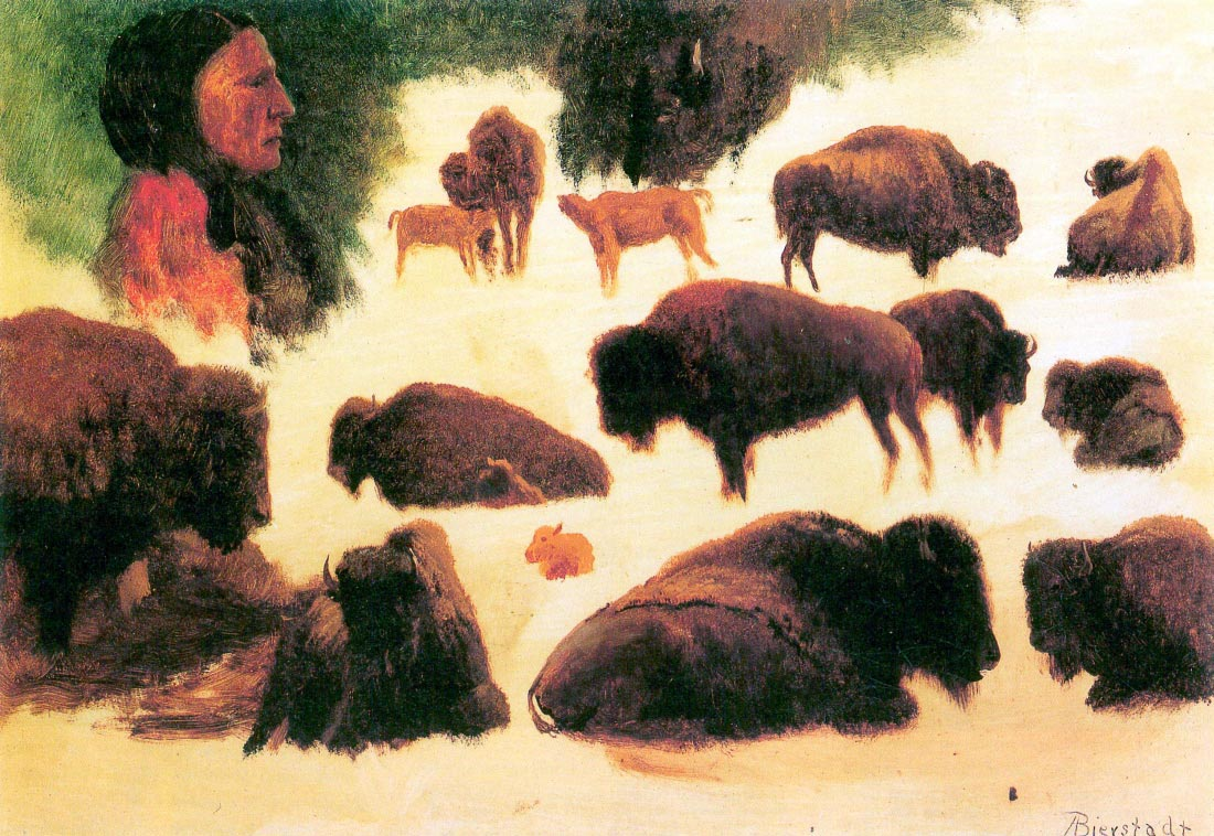 Study of Buffaloes - Bierstadt