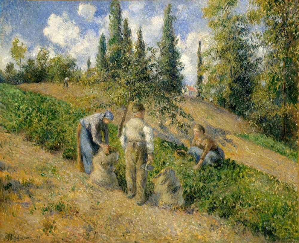 The Harvest, Pontoise (La Récolte, Pontoise) - Camille Pissarro