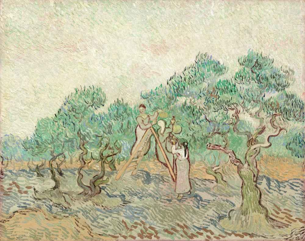 The Olive Orchard - Vincent van Gogh