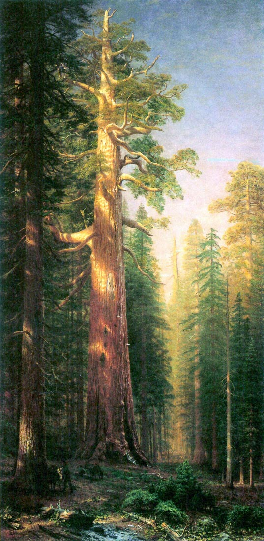 The big trees, Mariposa Grove, California - Bierstadt