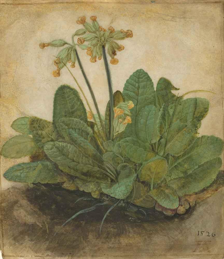 Tuft of Cowslips, 1526 - Albrecht Durer