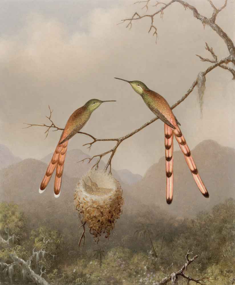 Two Hummingbirds with Their Young - Martin Johnson Heade