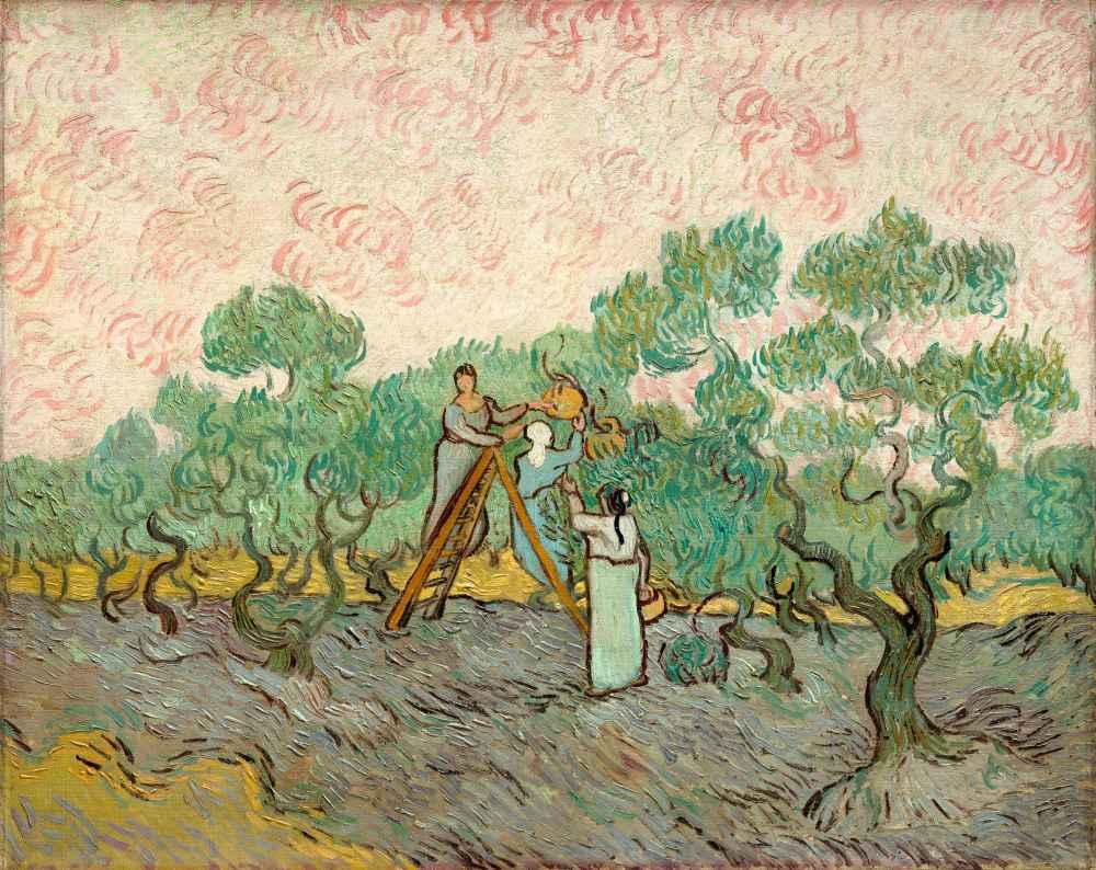Women Picking Olives - Vincent van Gogh